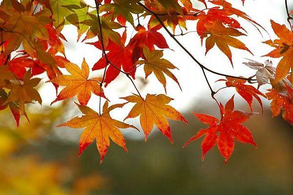 fall-leaves-main_full